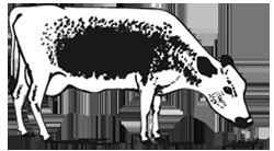 STN-logo